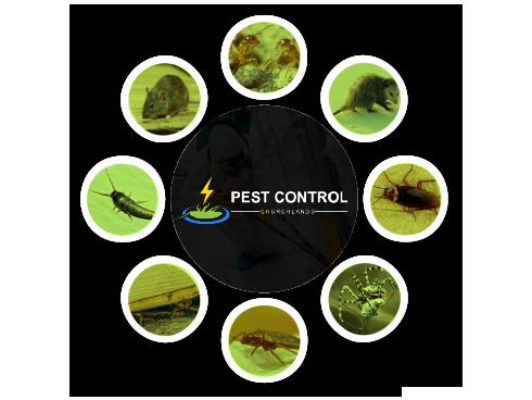 Pest Control Churchlands